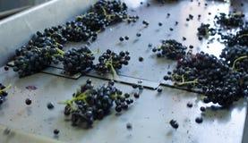Grape on beltline Stock Images