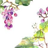 Grape berry healthy food. Watercolor background illustration set. Frame border ornament square. Grape berry healthy food. Watercolor background illustration set vector illustration