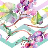 Grape berry healthy food. Watercolor illustration set. Seamless background pattern. Fabric wallpaper print texture. Grape berry healthy food. Watercolor stock illustration