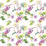 Grape berry healthy food. Watercolor illustration set. Seamless background pattern. Fabric wallpaper print texture. Grape berry healthy food. Watercolor royalty free illustration