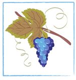 Grape blue. Cluster of blue grapes. Vector illustration Stock Photos