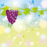 Grape with blur autumn background Royalty Free Stock Images