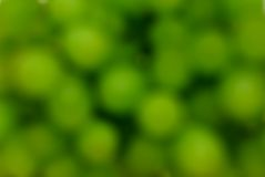Grape blur background. Green grape blur abstract background Stock Photo