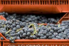 Grape in a box stock image