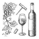 Grape branches, bottle, glass of wine. Grape branches, bottle, glass of wine, corkscrew, cork. Isolated on white background. Hand drawn vector illustration Stock Image