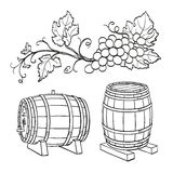 Grape branches and wine barrels vector illustration