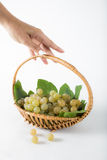 Grape bring harvest Royalty Free Stock Image
