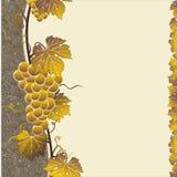 Grape brown frame Royalty Free Stock Photo