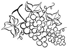 Grape brunch. A illustration of grape brunch drawing Royalty Free Stock Image