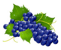 Grape brunch. Fresh grapes brunch wet with green leafs  illustration rasterized Stock Photography