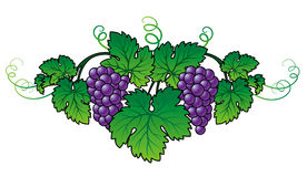 Grape Brunch. Abstract Grape with leafs (Vector Stock Image