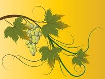 Grape brunch vector illustration
