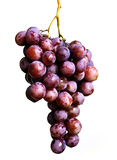 Grape bunch. Violet grape bunch isolated on white background Royalty Free Stock Photography