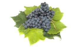 Grape bunch 6 Stock Images