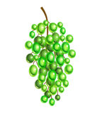 Grape Stock Photography