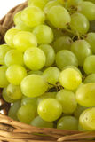 Grape bunch in wicker basket isolated close up. Lot of ripe grape bunches in brown wicker basket isolated on white close up vertical Stock Photo
