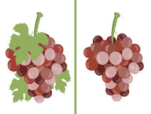 Grape. Bunches of grapes. Set of different grape varieties. Vector Royalty Free Stock Photo