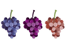 Grape. Bunches of grapes. Set of different grape varieties. Vector Royalty Free Stock Image