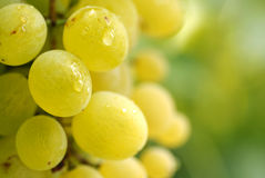Grape close-up Royalty Free Stock Photography