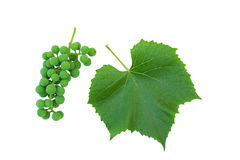 Grape cluster. And vine leaf on white royalty free stock images