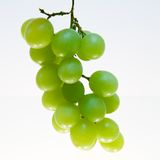 Grape Cluster. Cluster of green grapes Stock Photography