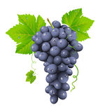 Grape cluster Royalty Free Stock Photography