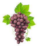 Grape cluster Royalty Free Stock Images