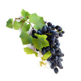 Grape cluster with green leafs. Fresh grape cluster with green leafs isolated with clipping path stock photo