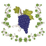 Grape cluster with green leafs Royalty Free Stock Photography