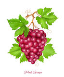 Grape cluster with green leaves. Royalty Free Stock Image