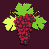 Grape cluster with green leaves. Vector illustration Royalty Free Stock Photo