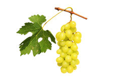 Grape cluster Stock Image