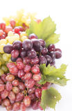 Grape cluster with leaves isolated Royalty Free Stock Photos