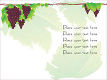 Grape cluster  with sample text Stock Photography
