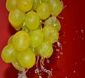 grape-cluster-under-pouring-water Stock Image