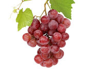 Grape cluster. Very clean grape white isolated Royalty Free Stock Image