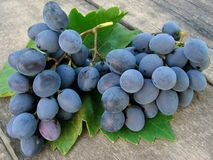 Grape clusters with leaf Royalty Free Stock Photo