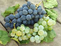 Grape clusters with leaves Stock Image