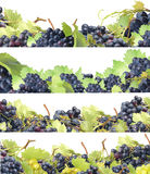 Grape collection Royalty Free Stock Photography