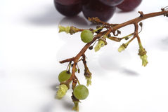 Grape detail Royalty Free Stock Images