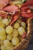 Grape - detail Stock Images