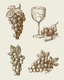 Grape doodle. Vector hand drawn grape sketch and vineyard doodle Stock Photo