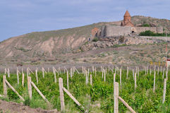 Grape field in Ararat valley. View of Khor Virap monastery Royalty Free Stock Image