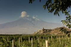Grape field in Ararat valley. View of Khor Virap and Mount Arara. View of the Khor Virap monastery and Mount Ararat. In the foreground grape plantations Royalty Free Stock Photography
