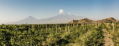 Grape field in Ararat valley. View of Khor Virap and Mount Arara. View of the Khor Virap monastery and Mount Ararat. In the foreground grape plantations Stock Photo