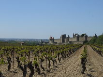 Grape Field and Castle Royalty Free Stock Images