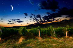 Grape field Royalty Free Stock Photography