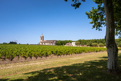 Grape field and old church behind. Landscape in Bordeaux region Royalty Free Stock Images