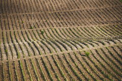 Grape fields above. Grape fields view from above royalty free stock photos
