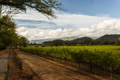 Grape fields of Napa Valley, California, United States. Grape fields of Napa Valley in Autumn. Napa Valley, California, United States Royalty Free Stock Photos